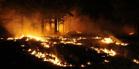 Wildfire Earth