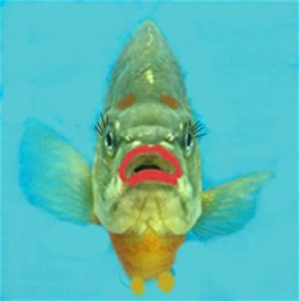 Endocrine Disruptive Chemicals - fish cartoon