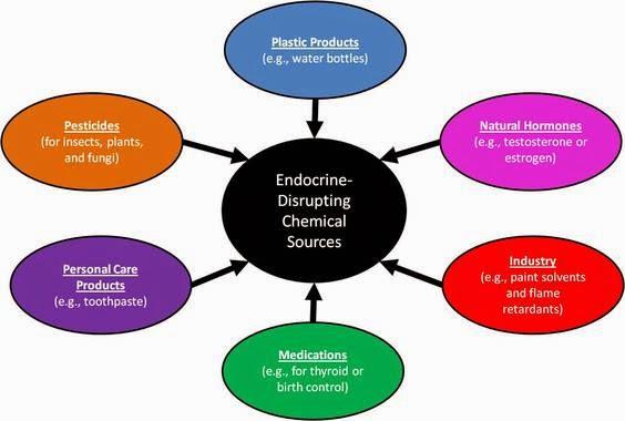 Endocrine Disruptive Chemicals