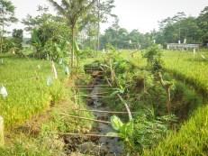 Sungai kecil yang jernih di antara sawah milik warga