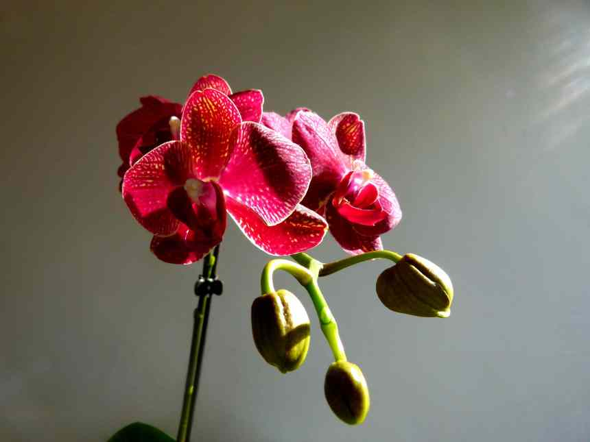 Orchids in the morning light