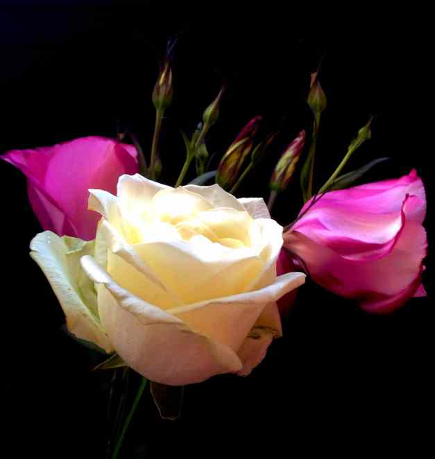 Rose with pink listhianthus low res