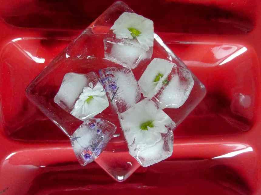 Flowers in ice cubes