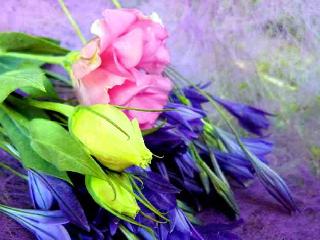 Californian Bluebells and Lisianthus low res