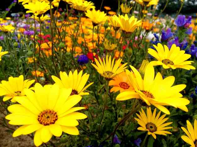Meadow flowers low res