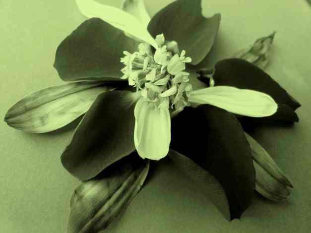 Petal arrangement green 2 low res
