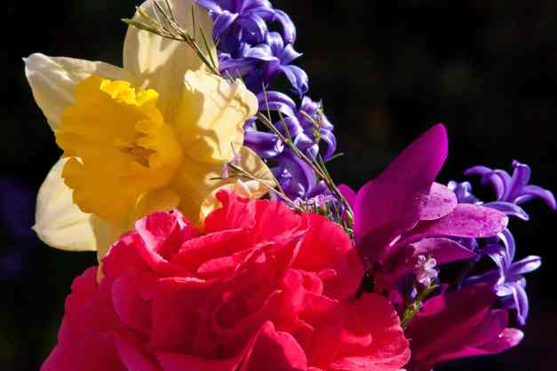 Bouquet garden low res