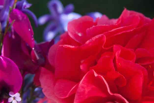 Garben bouquet 4 low res