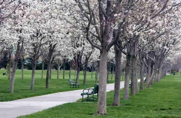 Blossom Avenue 2 low res