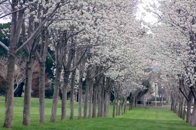 Blossom Avenue 3 low res