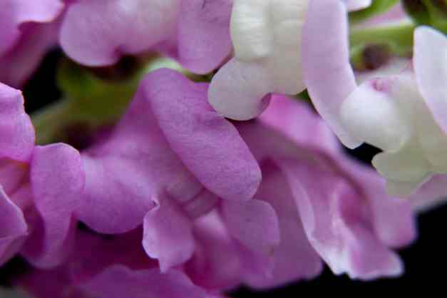 Snapdragons 5 low res