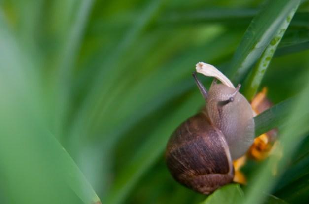 Snail smoking
