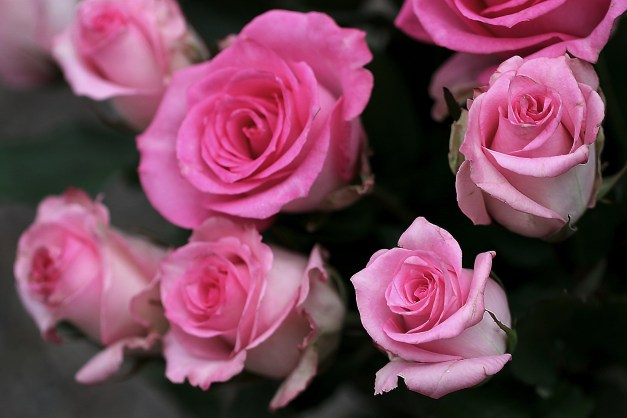 Roses pink bunch 2