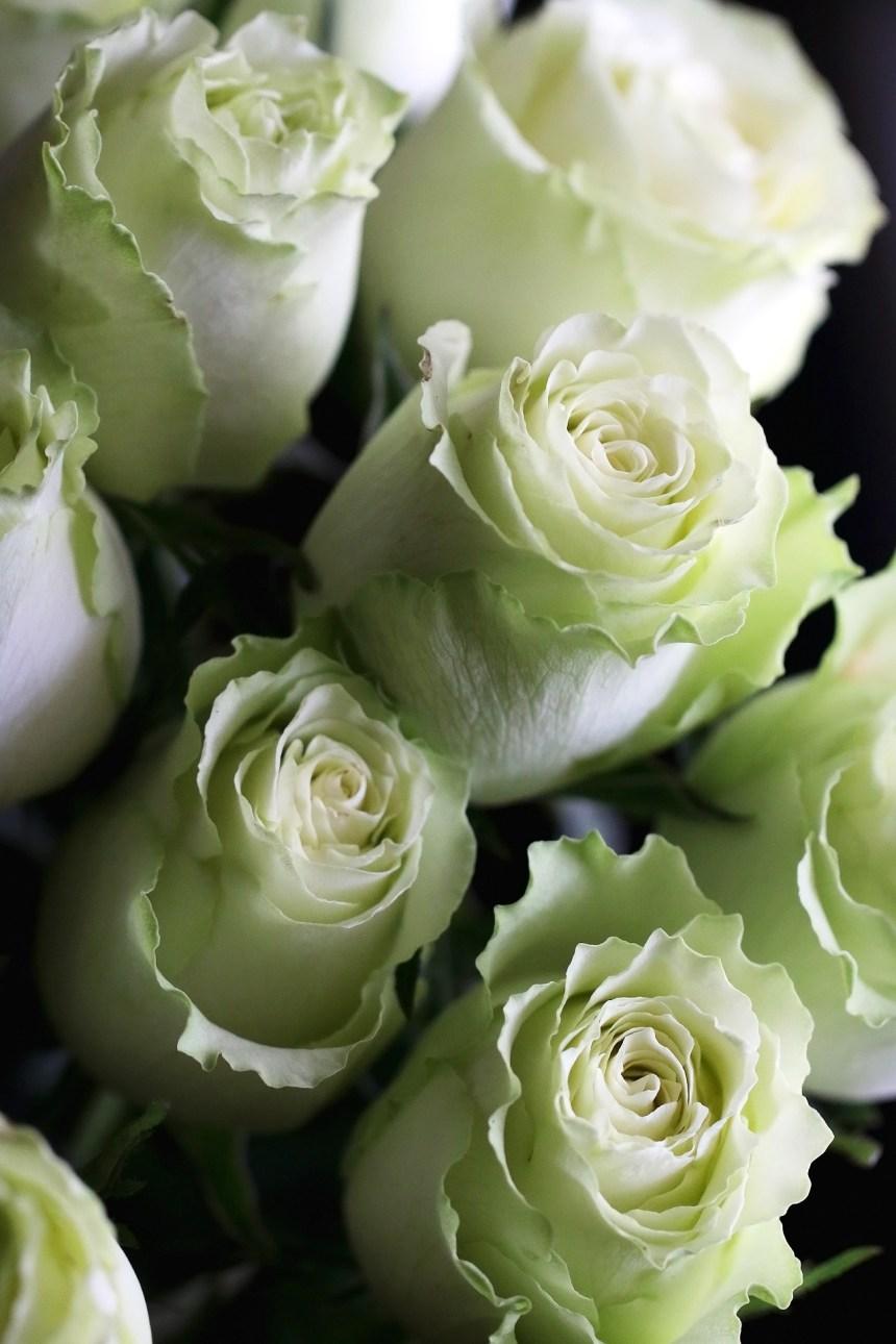 roses whitegreen