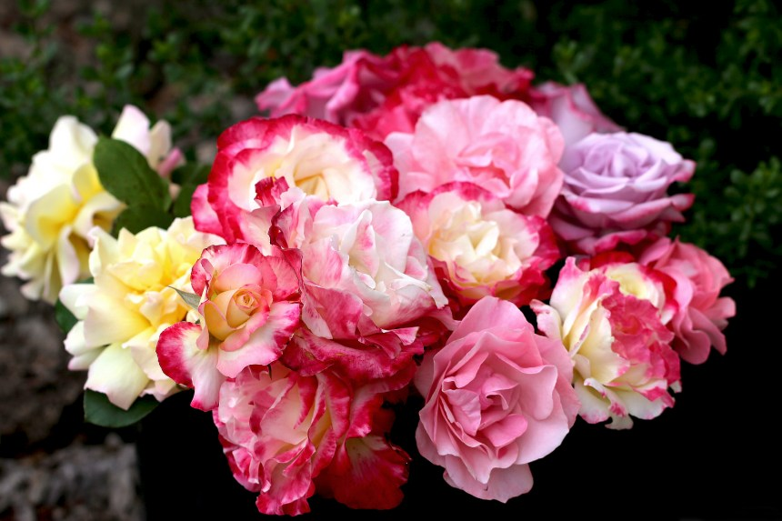Bucket of Roses 2
