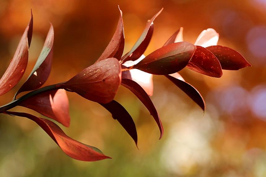 leaves-fall-glory