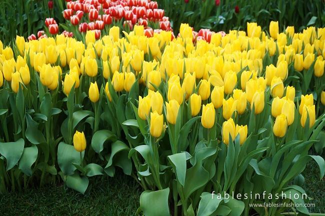 melbourne-flower-show-03