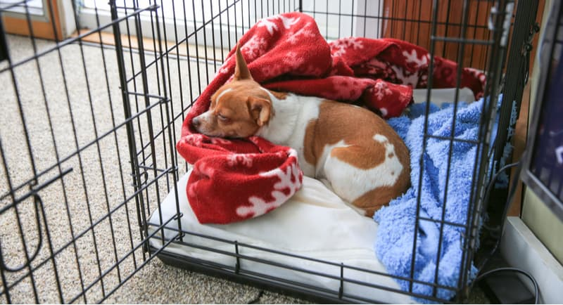Best dog crates and cages with reviews