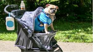 Best dog prams and strollers for pets
