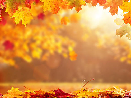Beautiful seasonal abstract autumn background with copyspace and falling leaves