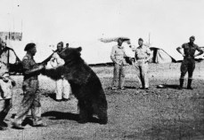 Troops_of_the_Polish_22_Transport_Artillery_Company_watch_as_one_of_their_comrades_play_wrestles_with_Wojtek_their_mascot_bear