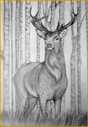 stag pencil deer a3 drawing sketches sketch simple drawings deviantart majestic head animals fabtemplatez drawn tailed