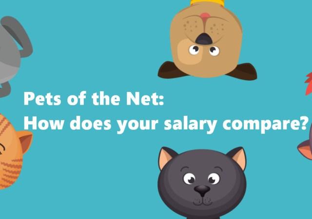 Pets of the net salary calculator