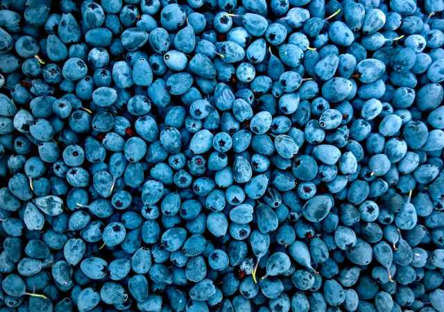 Blueberries to prevent heart attacks