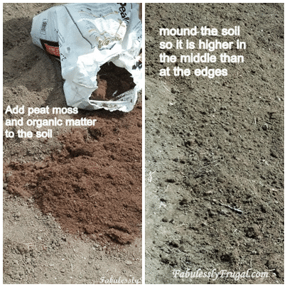 Preparing soil for strawberries