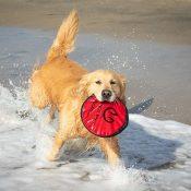 Amazon: Flippy Flopper Large Dog Frisbee $5.99 (Reg. $9.78)