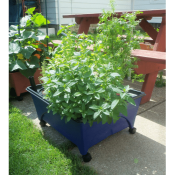 Amazon: Hydroponic Raised Bed System, 24
