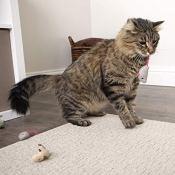Amazon: Catnip Cat Toys $1.97 (Reg. $3.99)