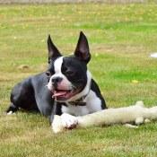 Amazon: Multipet Loofa Dog Plush Dog Toy (Colors May Vary) $1.99 (Reg....