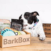 BarkBox Holiday Sale: First BarkBox Free Upgrade Get Double Free!