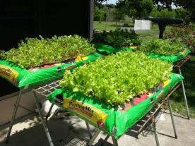 weed free garden
