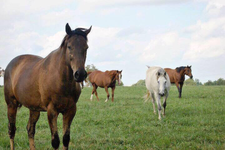 horses in lexington kentucky