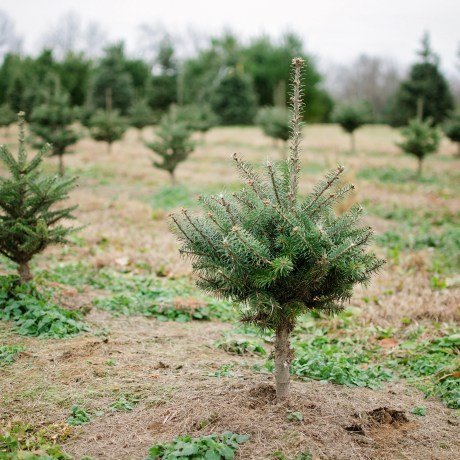 nieman's christmas tree farm