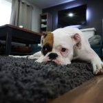Side-Hustle Series: Interview with a Rover.com Pet Sitter