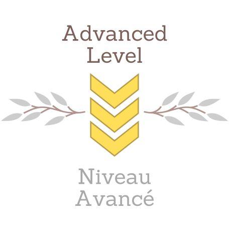 Modèle Niveau 1