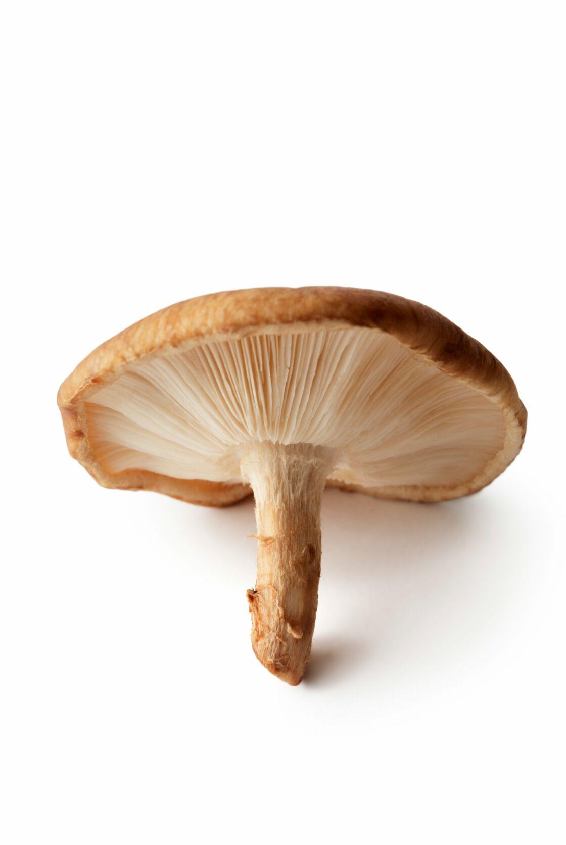 Comment Nettoyer Les Champignons Pieds Bleus : comment, nettoyer, champignons, pieds, bleus, Savoir, Champignons, Femme, Actuelle