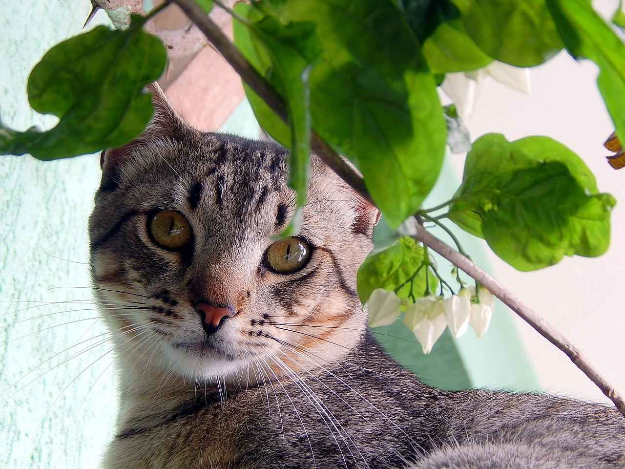 Facts About Feline Asthma  FACE Foundation