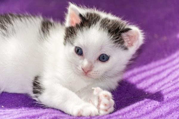 Video Shelters Prepare Year Kitten Season