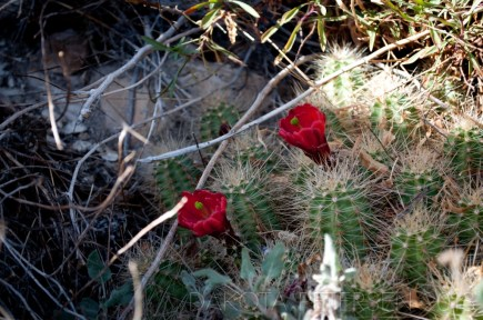 Rubies of the Earth