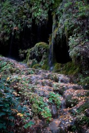 Mossy Steps Vert