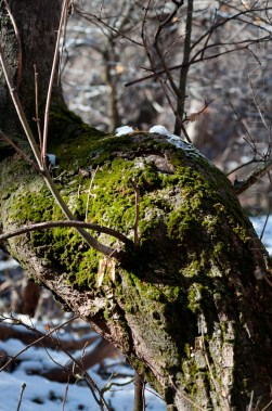 Resilient Moss