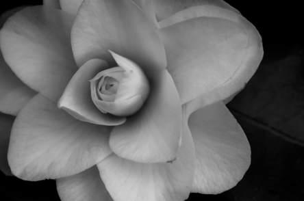 Flower in Laurelhurst Park