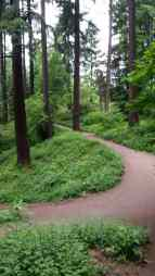 Trail in Mt. Tabor Park