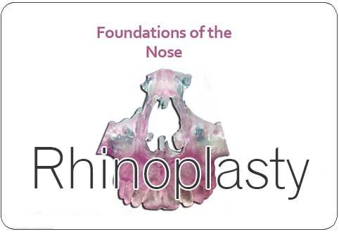 Rhinoplasty Surgery in Tamil Nadu
