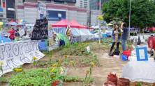 community garden at Occupy