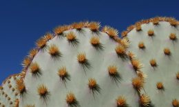 cactus-needles-arizona